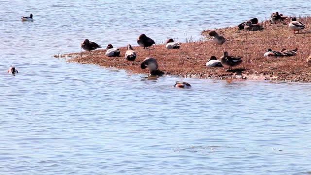 wildlife in llobregat natural park - water bird stock videos & royalty-free footage