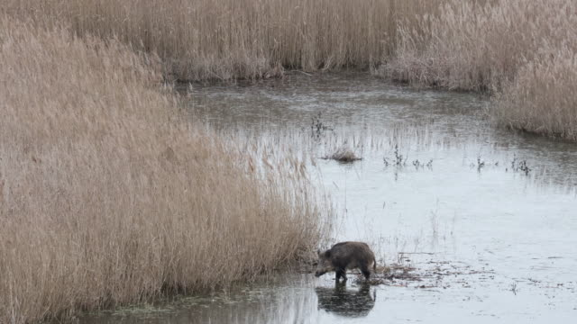wildlife in the spanish wetland of aiguamolls del emporda. - pond stock videos & royalty-free footage
