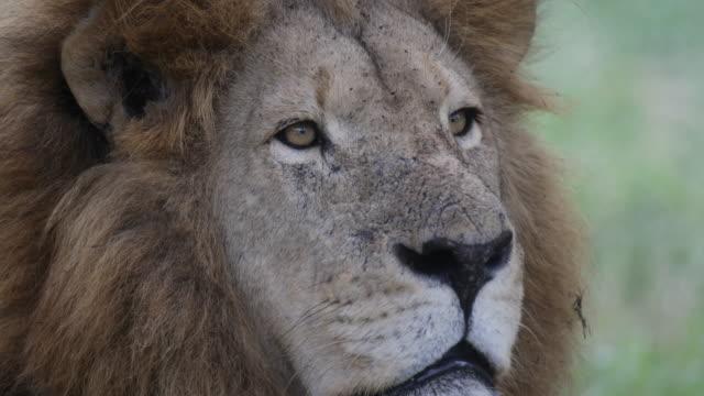 wildlife in zimbabwe - repubblica dello zimbabwe video stock e b–roll