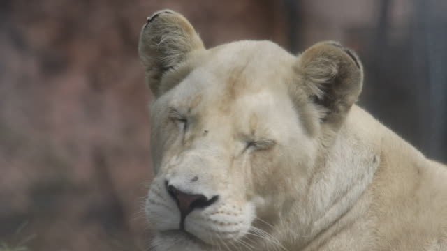 wildlife in zimbabwe - anmut stock-videos und b-roll-filmmaterial