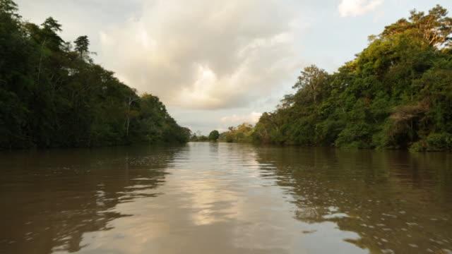 wildlife of pacaya-samiria national reserve, loreto - peru - amazon region stock videos & royalty-free footage