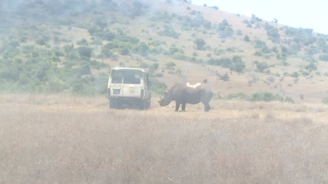 Wildlife officials on Monday began moving Twenty one black rhinos from Kenyas Lewa Wild Life conservancy and Lake Nakuru National Park to the Borana...
