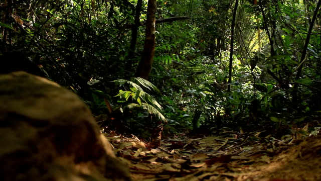 wildlife photographer taking picture of bird in the rainforest jungle - rainforest stock videos and b-roll footage