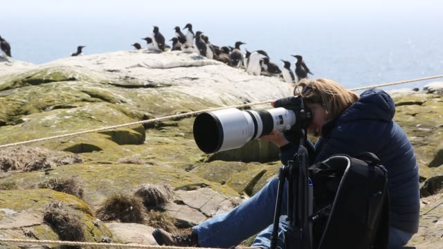 a wildlife photographer with common guillemots on breeding cliffs on the farne islands northumberland uk - northumberland coast stock videos & royalty-free footage