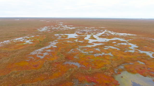 Wildlife sanctuary in Belarus. Aerial View. Flying over the forest swamps. Aerial drone shot
