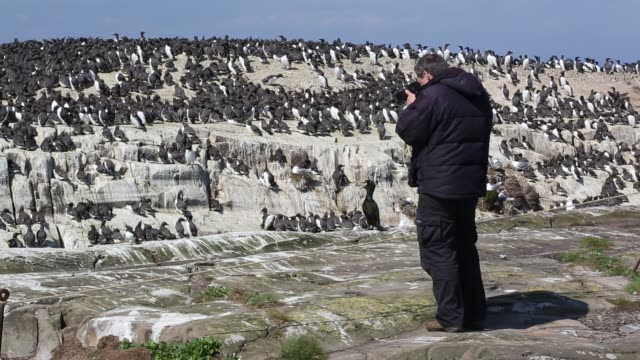 wildlife tourists on the farne islands northumberland uk with breeding seabirds - northumberland coast stock videos & royalty-free footage