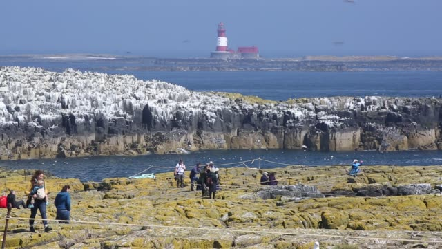 stockvideo's en b-roll-footage met wildlife tourists on the farne islands northumberland uk with breeding seabirds - duurzaam toerisme