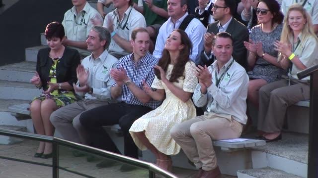 william duke of cambridge and catherine duchess of cambridge watch the bird show at taronga zoo on april 20 2014 in sydney australia the duke and... - herzogin stock-videos und b-roll-filmmaterial
