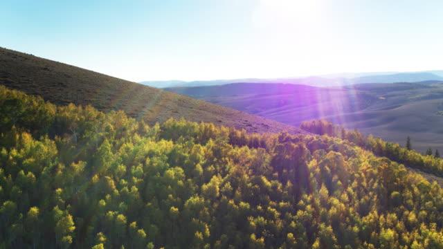 willow basin, utah - aerial shot - aspen tree stock videos & royalty-free footage
