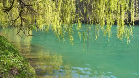 willow branches over flowing river - riverbank stock videos & royalty-free footage