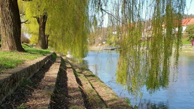 weidenbaum am fluss ljubljanica - trauerweide stock-videos und b-roll-filmmaterial