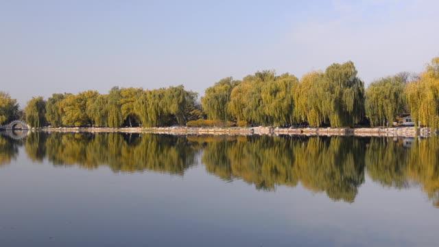 willow tree park reflektieren auf see - trauerweide stock-videos und b-roll-filmmaterial