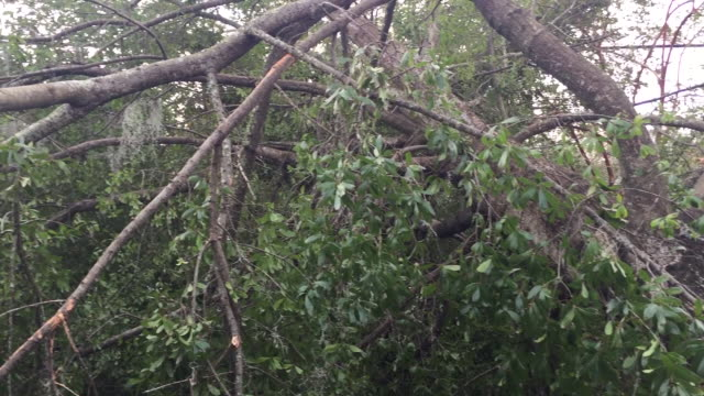 wghp wilmington nc us hurricane florence damage on monday september 17 2018 - plant attribute stock videos and b-roll footage