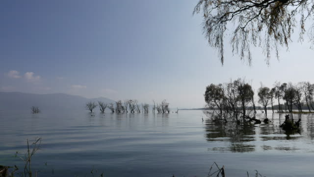 wilt trees in lake, erhai in yunnan - tranquillising stock videos & royalty-free footage