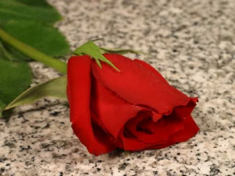 cu t/l wilted rose on floor  - rose stock-videos und b-roll-filmmaterial