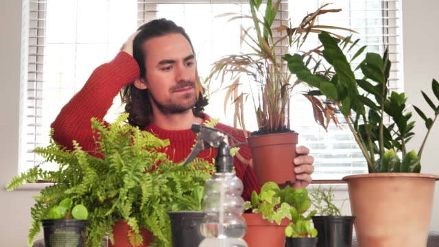 wilting houseplant. young man frustrated. - other stock videos & royalty-free footage