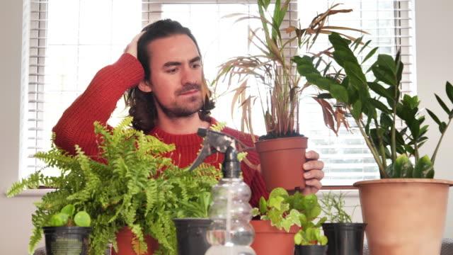 stockvideo's en b-roll-footage met verwelkende kamerplant. jonge man gefrustreerd. - kamerplant
