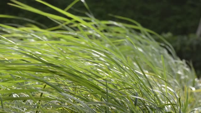 vidéos et rushes de vent contre meadow - dépression terrestre