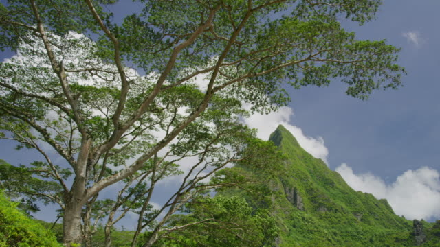 wind blowing branches in lush green mountain landscape / moorea, french polynesia - moorea stock videos and b-roll footage