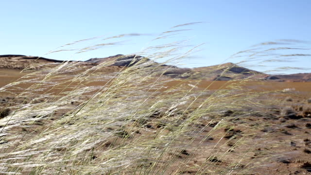 vidéos et rushes de wind blowing grass with sand dunes in the background - aride