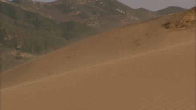 cu r/f wind blowing gust of sand over sand dune, longbaoshan village, hebei, china - sandstorm stock videos & royalty-free footage