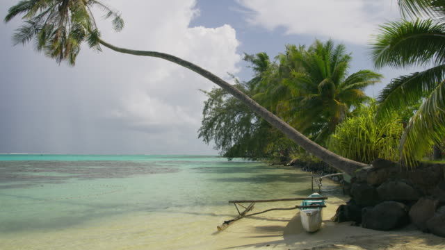vidéos et rushes de wind blowing leaves on palm tree over outrigger in tahiti lagoon / moorea, french polynesia - moorea