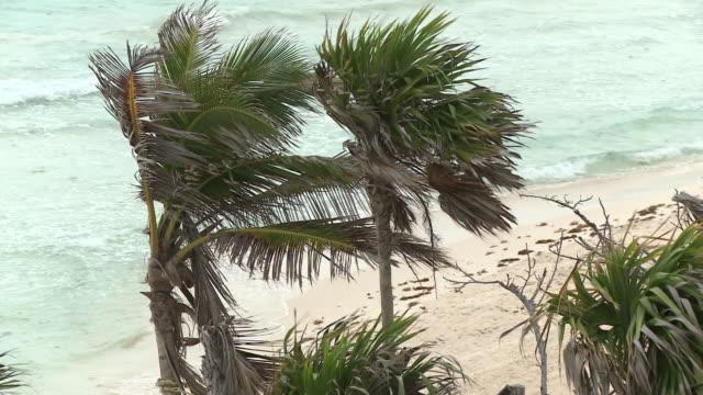 ms, ha, wind blowing on palm trees on beach, playa del carmen, quintanaroo, mexico - palma nana video stock e b–roll
