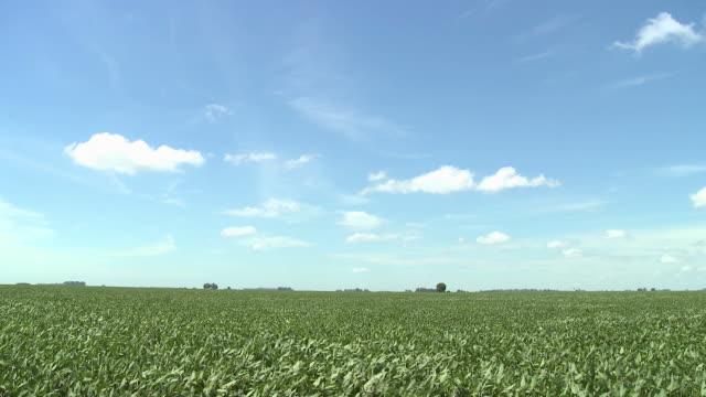 Wind blowing plants in field