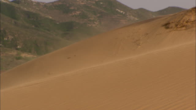 ms wind blowing sand over desert dune, longbaoshan village, hebei, china - sandstorm stock videos & royalty-free footage
