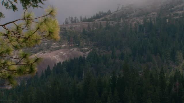 vídeos de stock, filmes e b-roll de ws wind blowing through branches of evergreen tree on hillside in sierra national forest / fresno county, california, usa - fresno