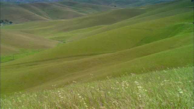 WS Wind blowing through grass on hillside in GREEN valley / Livermore, California, USA
