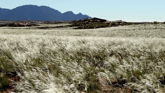 vidéos et rushes de wind blowing through grass with mountains in the background - herbe