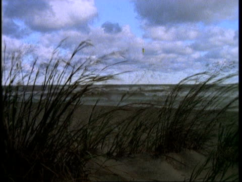 Wind blowing through Maram grass on top of sand dune, Presque Isle, USA