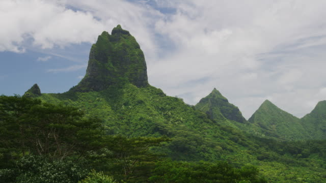 wind blowing tree branches near lush green mountain landscape / moorea, french polynesia - moorea stock videos and b-roll footage