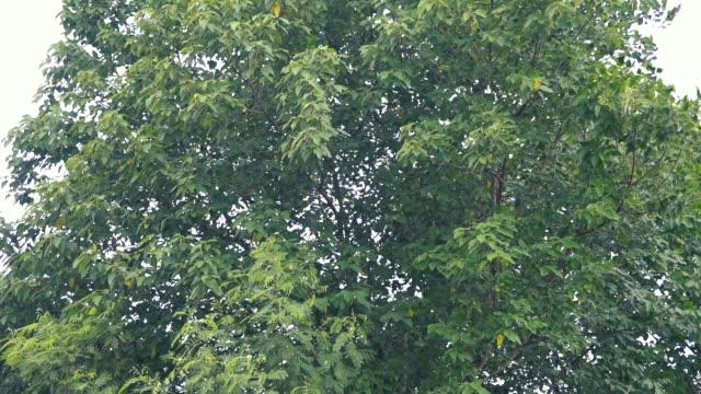 wind weht baum - ast pflanzenbestandteil stock-videos und b-roll-filmmaterial