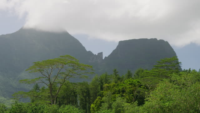 wind blowing trees in lush green mountain landscape / moorea, french polynesia - moorea stock videos and b-roll footage