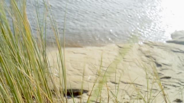 wind blown marram grass-finistere - marram grass stock videos & royalty-free footage