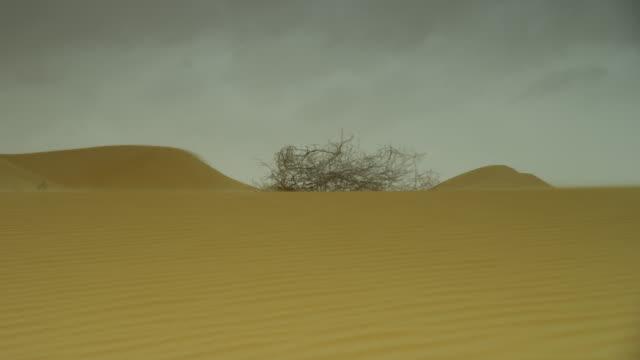 Wind blows dead vegetation over desert dune, UAE