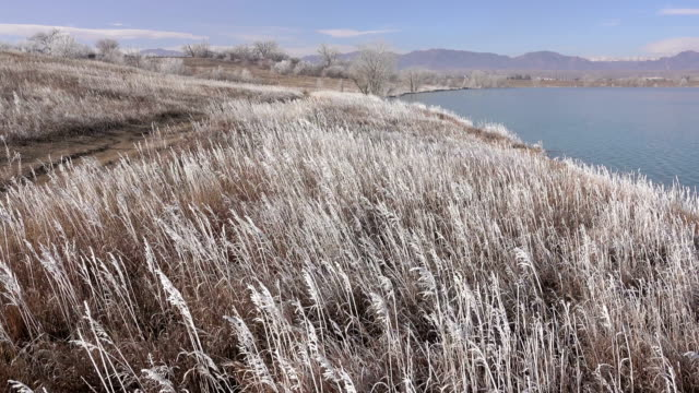Wind blows frost covered grass Standley Lake Rocky Mountains Westminster Colorado