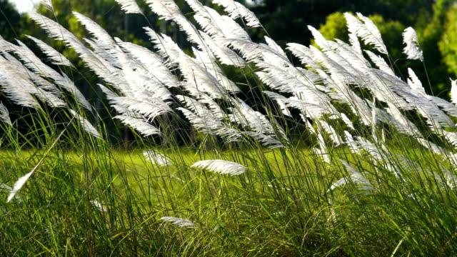 wind blows grass flowers slow motion at beautiful. - zona erbosa video stock e b–roll