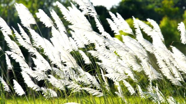 vídeos de stock e filmes b-roll de wind blows grass flowers slow motion at beautiful. - suavidade
