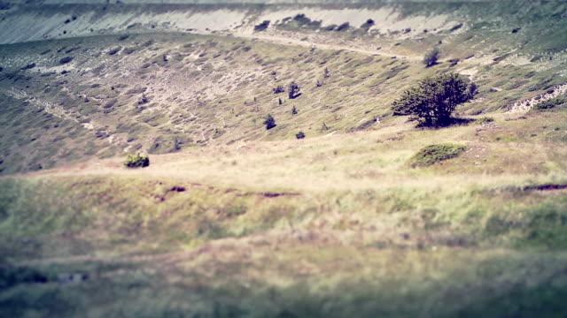 Le vent souffle sur les champs vidéo Tilt Shift