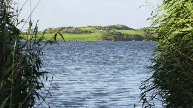 wind blows through lakeside reeds, anglesey, wales - galles video stock e b–roll