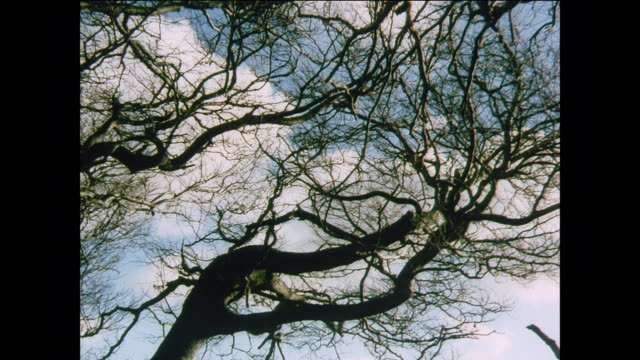 vídeos de stock e filmes b-roll de ws wind blows through the trees in winter / uk - bare tree
