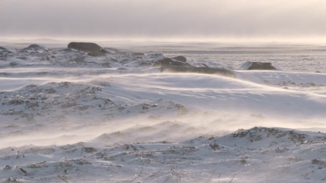wind driven snow on tundra, canada - clima polare video stock e b–roll