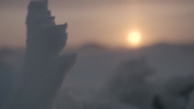 vidéos et rushes de wind driven snow on tundra, canada - mise au point au 1er plan