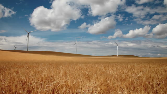 WS T/L Wind farm towers spinning in golden field of wheat with cloud shadows rolling across landscape / Cutbank, Montana, United States