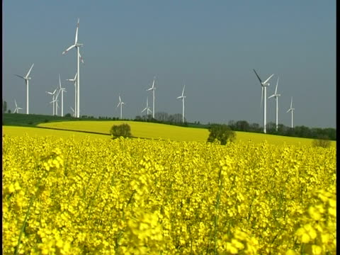 stockvideo's en b-roll-footage met wind generator with a canola field in the forground - west europa
