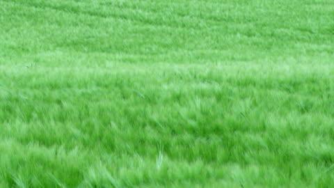 風になびく芝生–スローモーション - grass点の映像素材/bロール