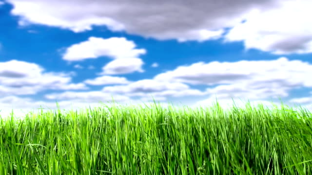 wind in grass - grass family stock videos & royalty-free footage